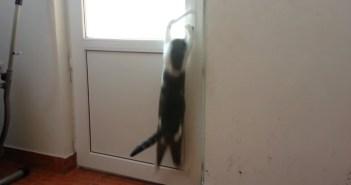 次々とドアを開ける猫