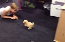 小さくなった犬
