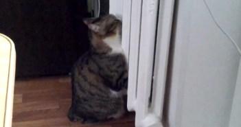 ヒーター猫