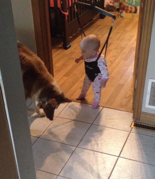 ジャンプを教える犬