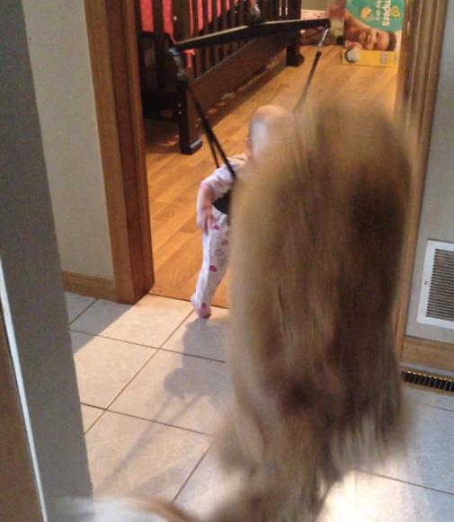 違う角度からジャンプを見せる犬