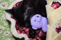 チェリーパイベッドでスヤスヤ眠る猫