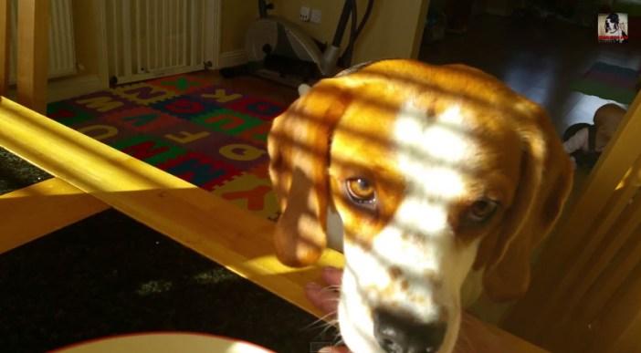 朝食を欲しそうにする犬