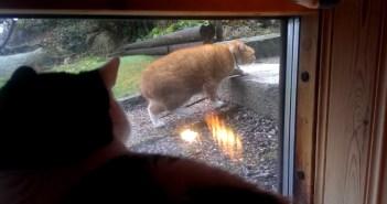 ゆっくり歩く猫を見つめる猫