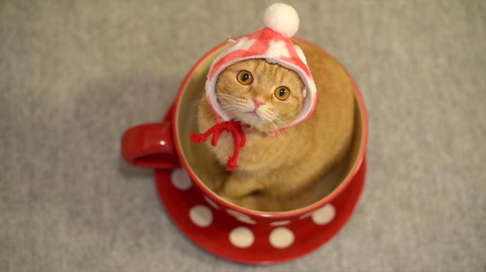 ティーカップに入って上を見上げる猫