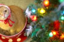 クリスマスキャット
