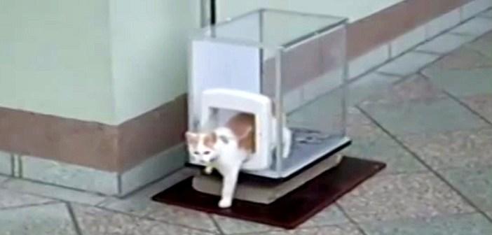 猫専用エレベーター