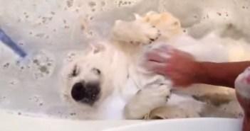 お風呂が大好きな犬