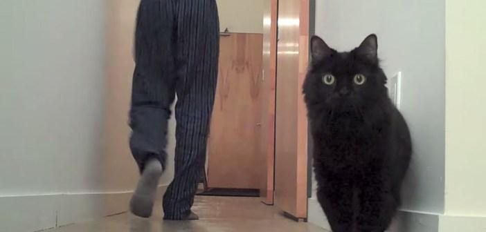 今の何と考える猫
