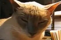 根落ちする猫