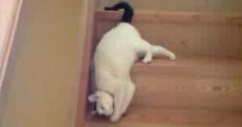 背中で階段をおりる猫