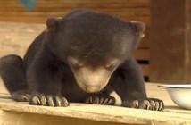 座ったまま眠るクマ