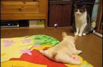 猫を警戒する子犬