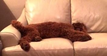 悪い夢を見る友達を心配する犬