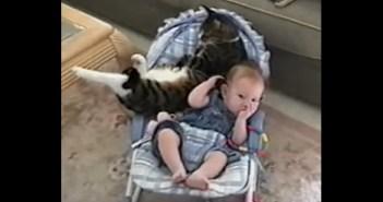赤ちゃんにくっつきたい猫