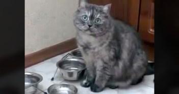 餌がないことをアピールして来る猫