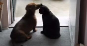 じゃれてくる犬を静止する猫