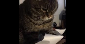 紙をペシペシする猫