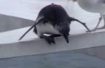 水に入れないペンギン