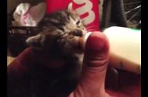 うまいうまいと言いながらミルクを飲む子猫
