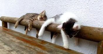 ベンチの手すりと子猫