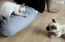 助けを求める猫