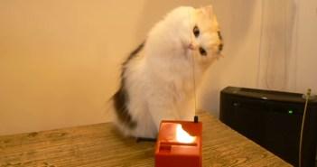 テルミンを演奏する猫