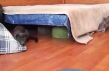 子猫にビックリする母猫