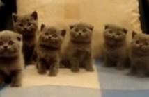同じ動きをする子猫
