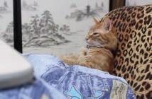 コタツでまったりとくつろぐ猫