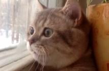 顔が丸い猫
