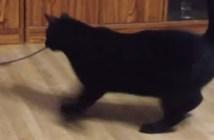 目が回る猫