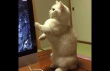 背筋がピーーーンと伸びる猫