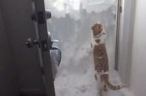 雪を掻き分ける猫