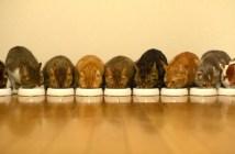食事をする9匹の猫