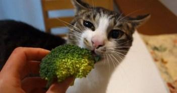 ブロッコリーが大好きな猫