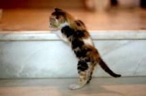 階段を登ろうとする子猫