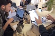 猫がいっぱいいる会社