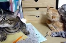 目のやり場に困る猫
