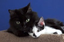 仲良しな二匹の猫