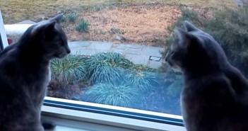 お話しする猫