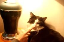 猫鼻スイッチ