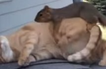 じゃれ合うリスと猫