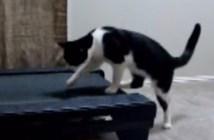 ルームランナーに上手く乗れない猫