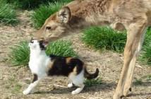 シカにペロペロされて幸せそうな猫