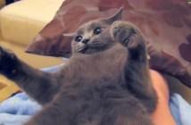 「ワン」と鳴く猫