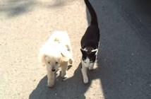 目の見えない犬をサポートする猫