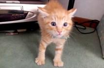 初めて猫に会う子猫