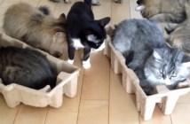 猫ホイホイ