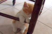 イスの足に寄りかかる子猫